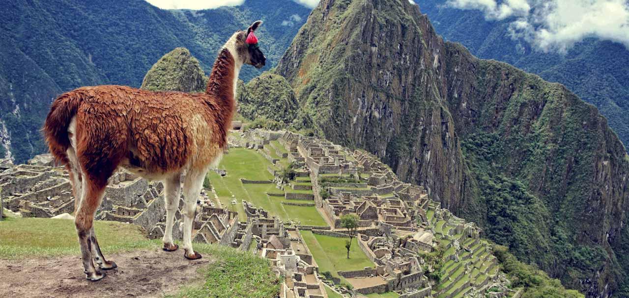 machu picchu panoramic view with llama