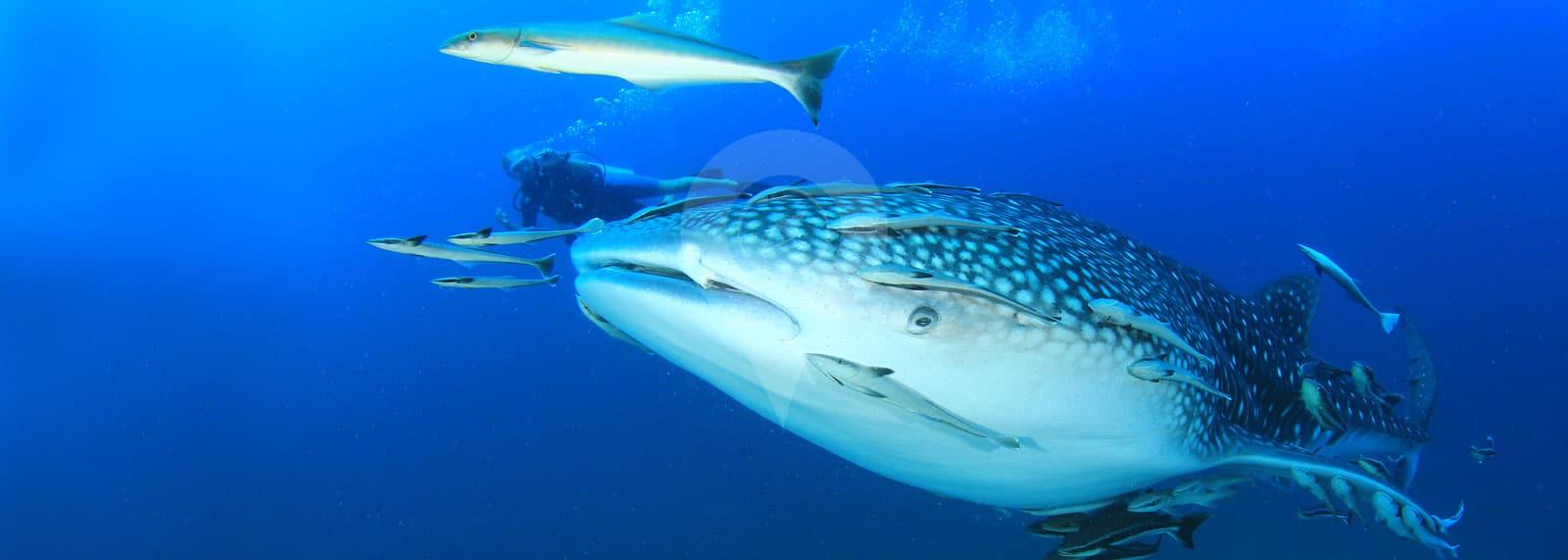 Galapagos Diving Day Tours & Programs