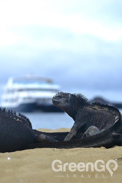 galapagos-vs-caribbean-Galapagos-expeditions