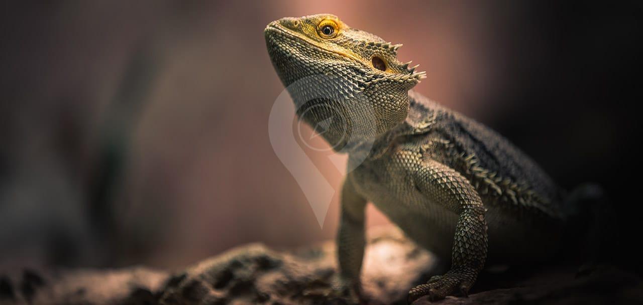 Galapagos-Animals-Header
