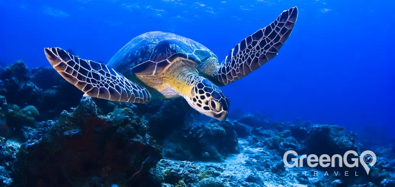 Galapagos - animals-green-turtle
