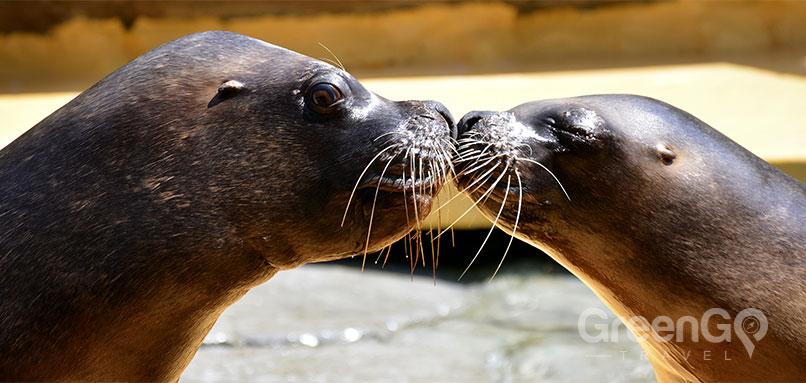 Galapagos-Honeymoon-Seals-Kissing