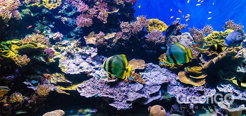 Galapagos Reef