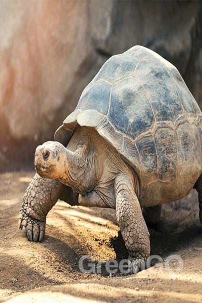 Galapagos Yachts-Tortoise