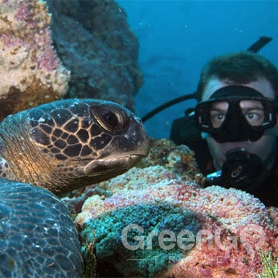 Hawaii-Versus-Galapagos-Scuba-diver-getting-a-closer-look-at-a-turtle
