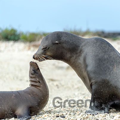 Highlights-of-The-Sea-Star-Journey-Galapagos-Galapagos-Sea-Lion-and-baby