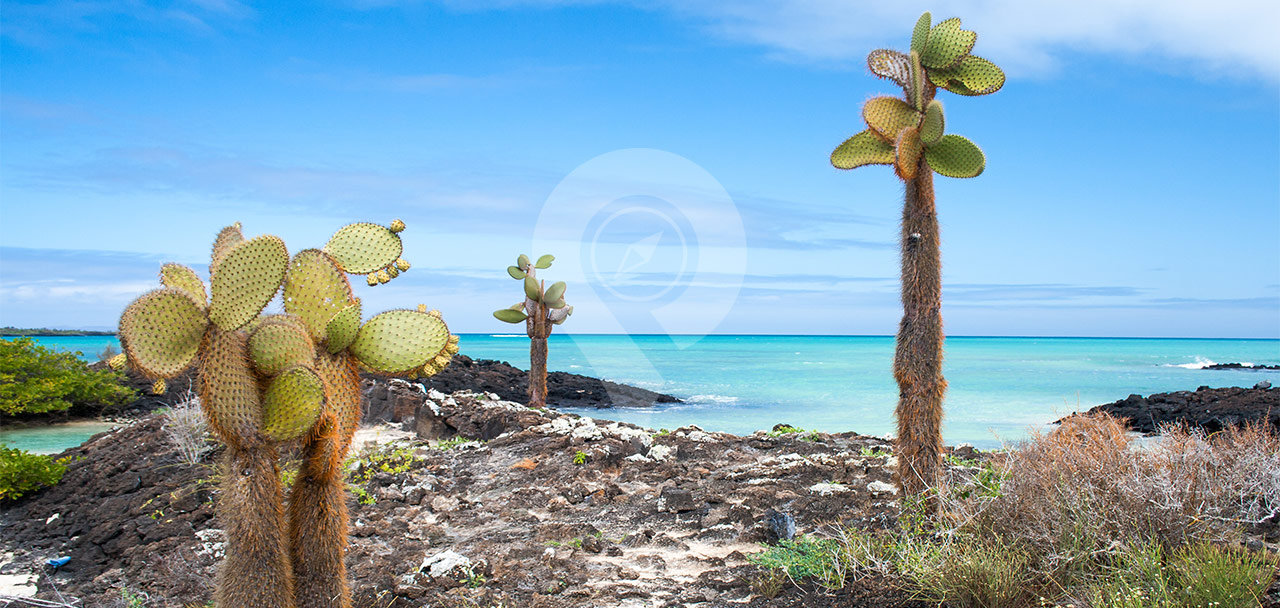 Highlights-of-the-Camila-Galapagos-Cruise-Galapagos-Cactus-with-blue-ocean-in-the-background.