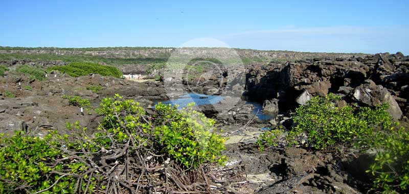 Genovesa - Galapagos Islands