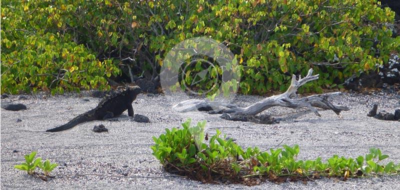 Punta Albemarle - Galapagos Islands