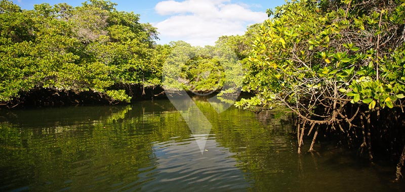 Black Turtle Cove - Galapagos Islands