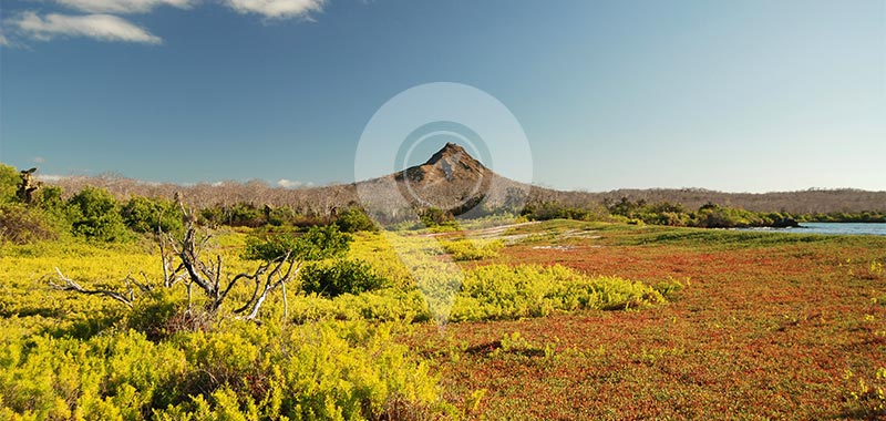Dragon Hill - Galapagos Islands