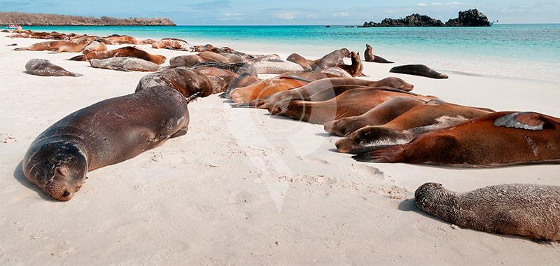 Mosquera Island - Galapagos Islands