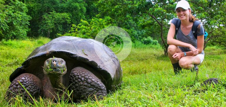Galapagos tortoise -Best trips to south America