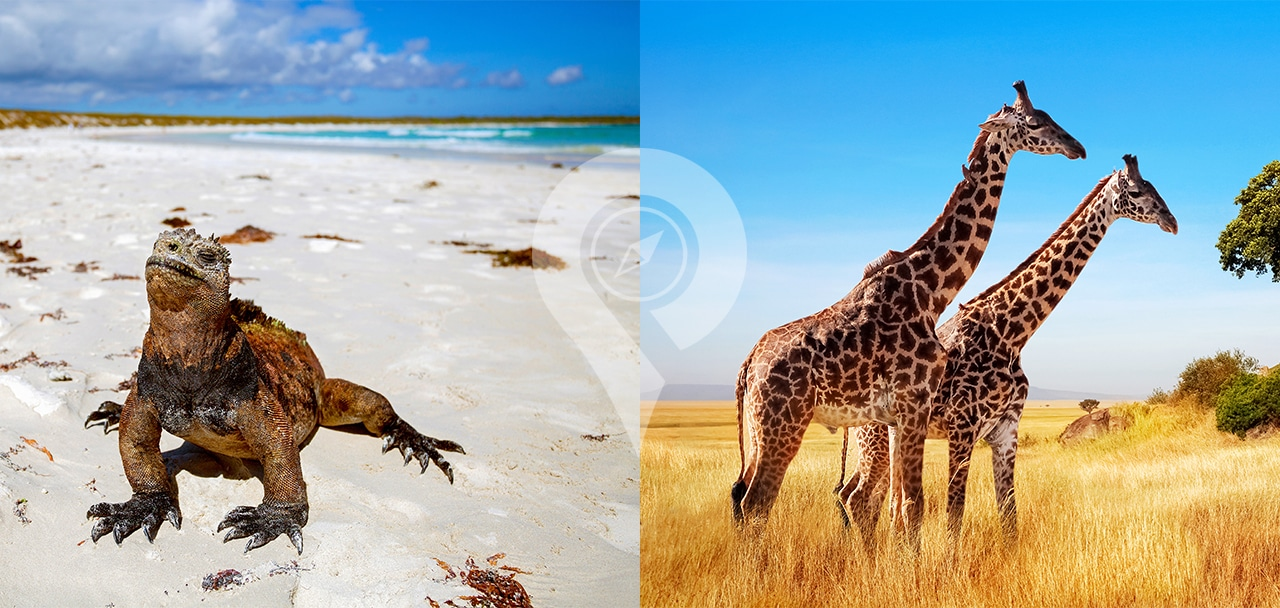 African Safari vs Galapagos Islands header