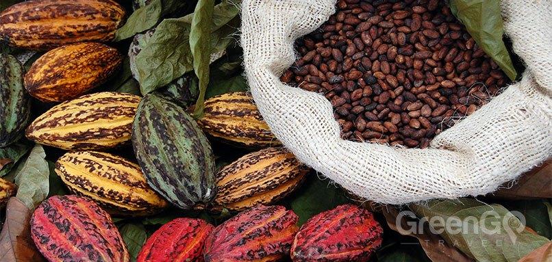 Ecuador-Souvenir-Guide-Cacao