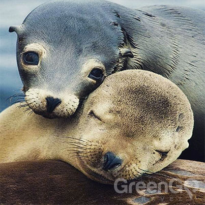 Galapagos-Weather-by-Month-Guide-Sea-lions
