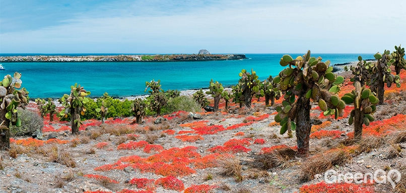 Why go to the Galapagos islands - South Plaza Island