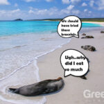 best-time-to-visit-galapagos-to-avoid-seasickness---galapagos-sea-lions