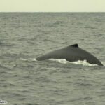 puerto-lopez-whale-watching
